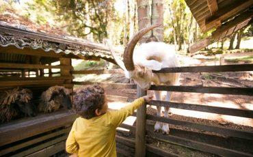 Férias antecipadas no Toriba: cortesia para crianças e final de semana com 3 dias