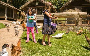 Fazendinha Toriba oferece contato direto com animais e entrada grátis no Natal