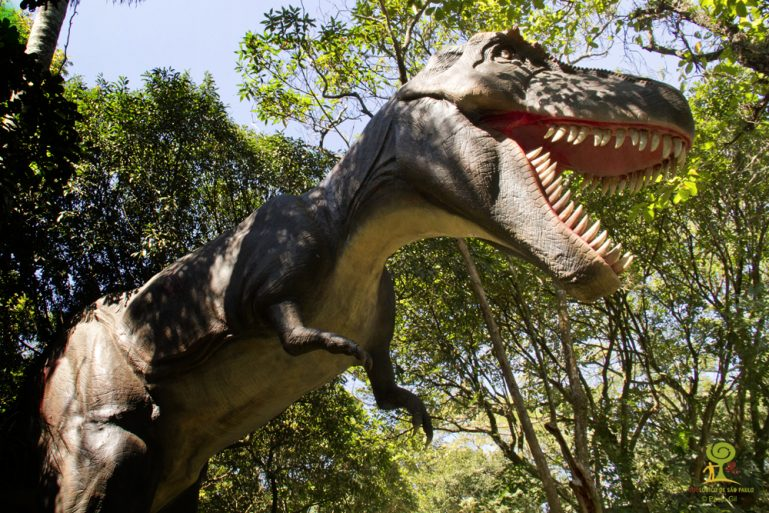 Zoológico de São Paulo e Zoo Safári reabrem nesta terça (15/03)