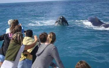 Dica de viagem com crianças: Ir até a Bahia ver de perto o espetáculo das baleias Jubarte