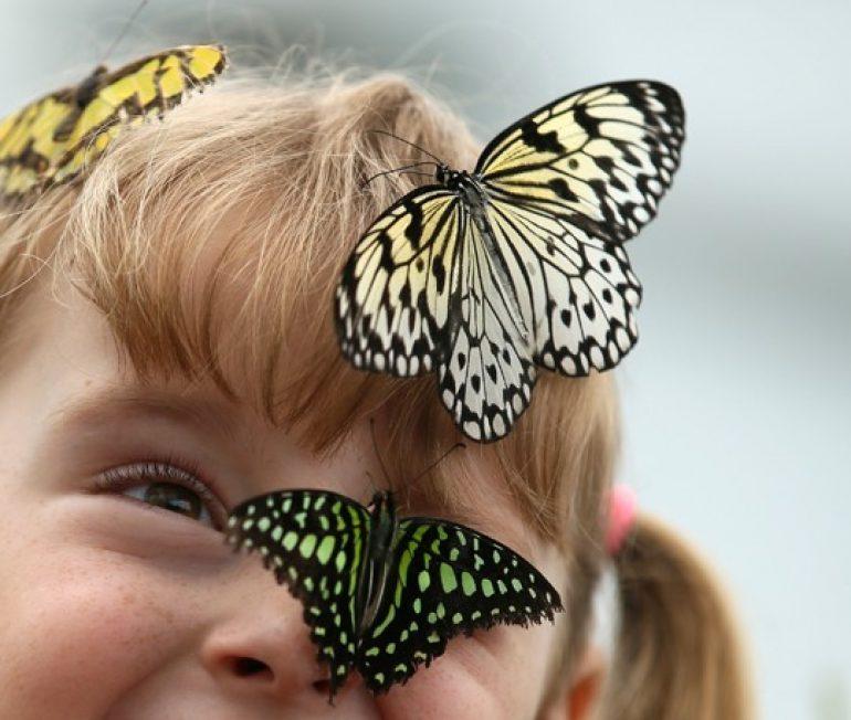 Borboletário Águias da Serra: passeio diferente e divertido com as crianças