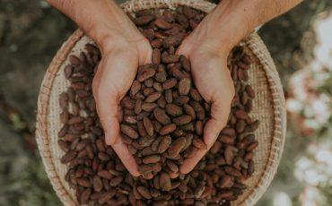 Passeio em família: Bienal será palco da maior feira de chocolate do Brasil nos dias 12 e 14 de Abril